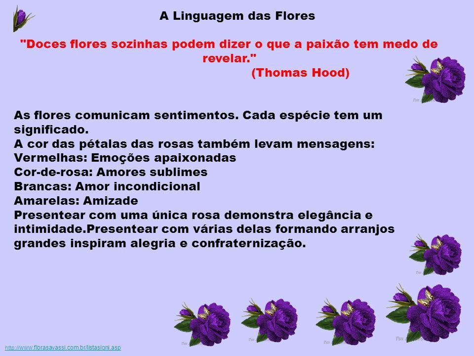 As flores comunicam sentimentos. Cada espécie tem um significado.