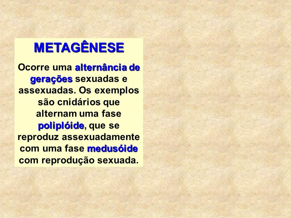 METAGÊNESE