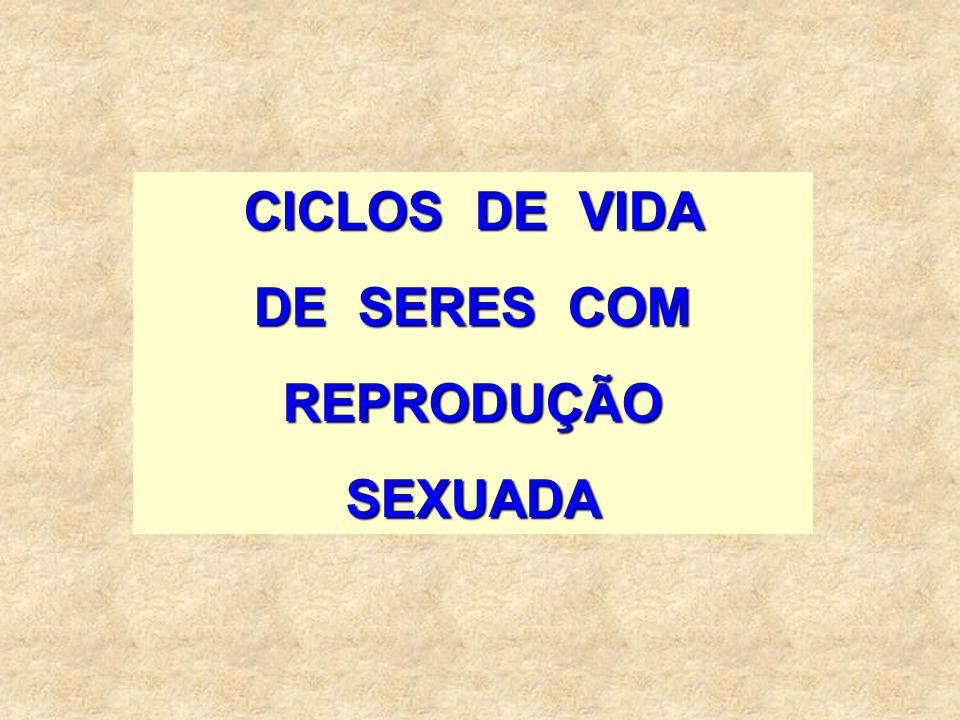 CICLOS DE VIDA DE SERES COM REPRODUÇÃO SEXUADA