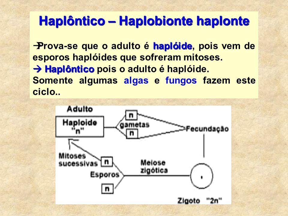 Haplôntico – Haplobionte haplonte