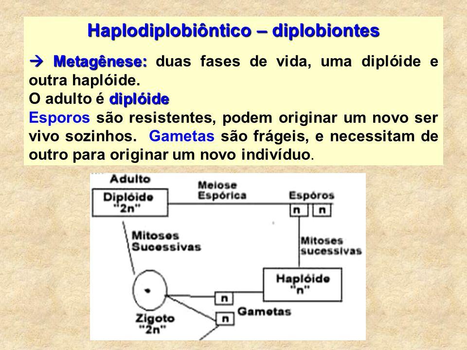 Haplodiplobiôntico – diplobiontes