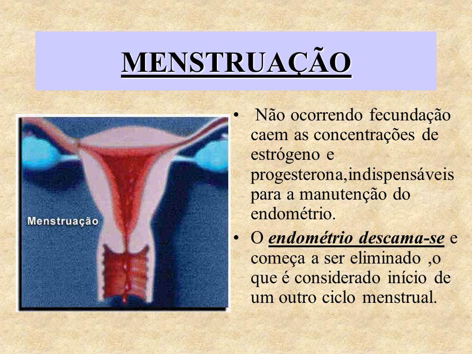 MENSTRUAÇÃO Não ocorrendo fecundação caem as concentrações de estrógeno e progesterona,indispensáveis para a manutenção do endométrio.