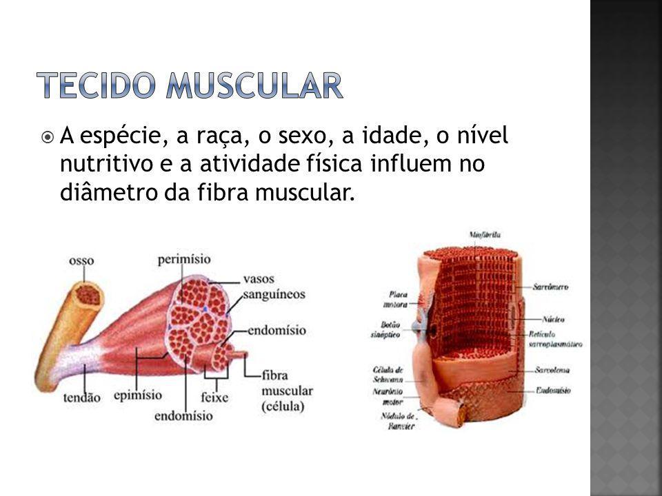 Tecido muscular A espécie, a raça, o sexo, a idade, o nível nutritivo e a atividade física influem no diâmetro da fibra muscular.