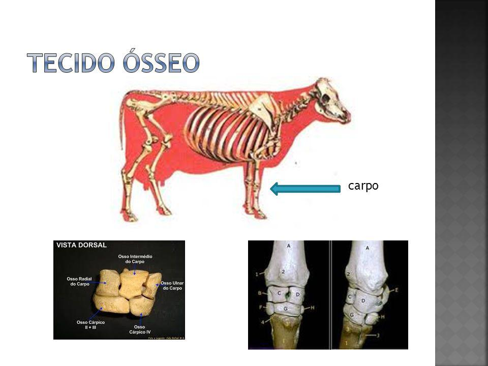 Tecido ósseo carpo