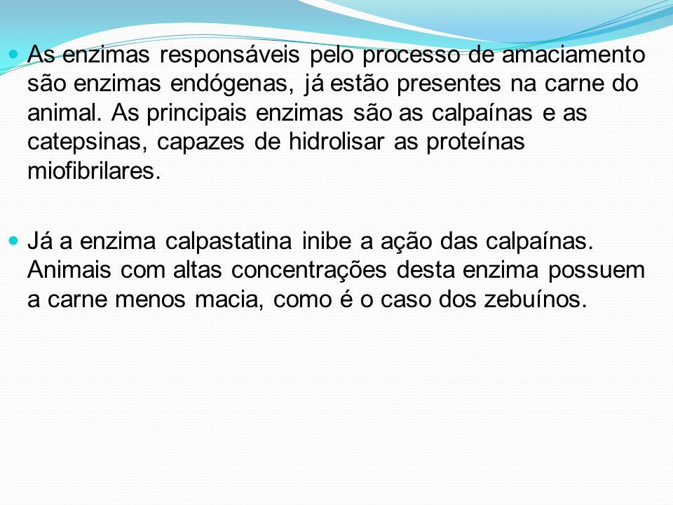 As enzimas responsáveis pelo processo de amaciamento são enzimas endógenas, já estão presentes na carne do animal. As principais enzimas são as calpaínas e as catepsinas, capazes de hidrolisar as proteínas miofibrilares.