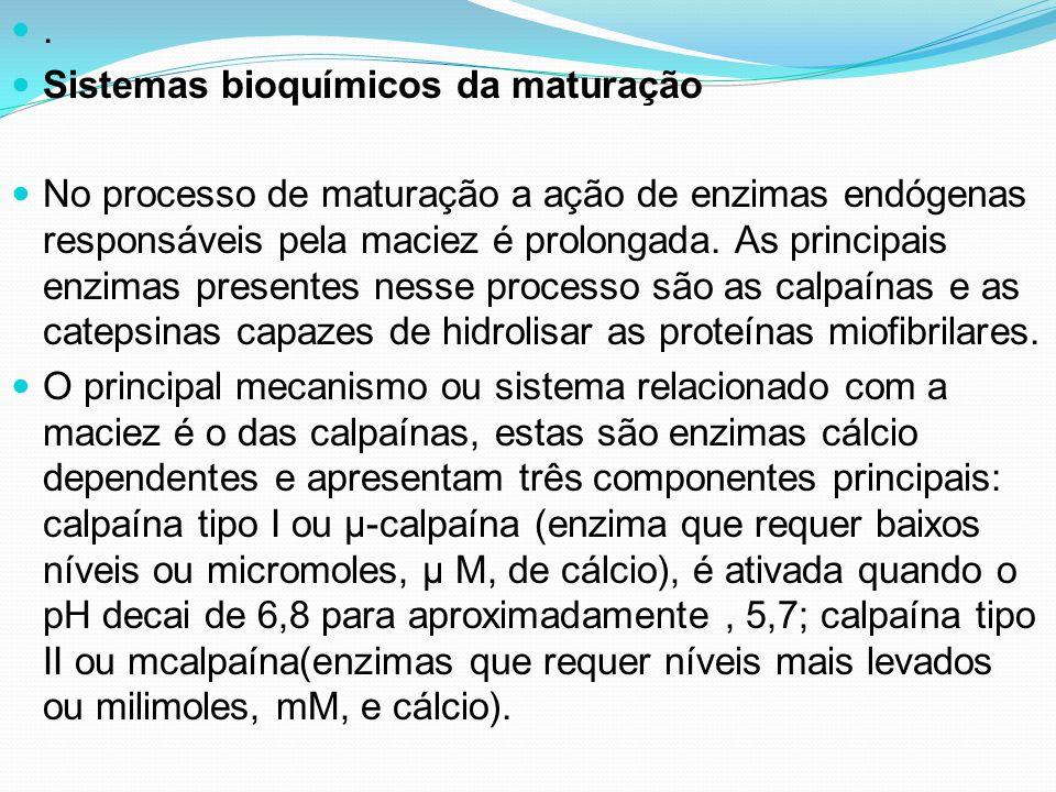 . Sistemas bioquímicos da maturação.
