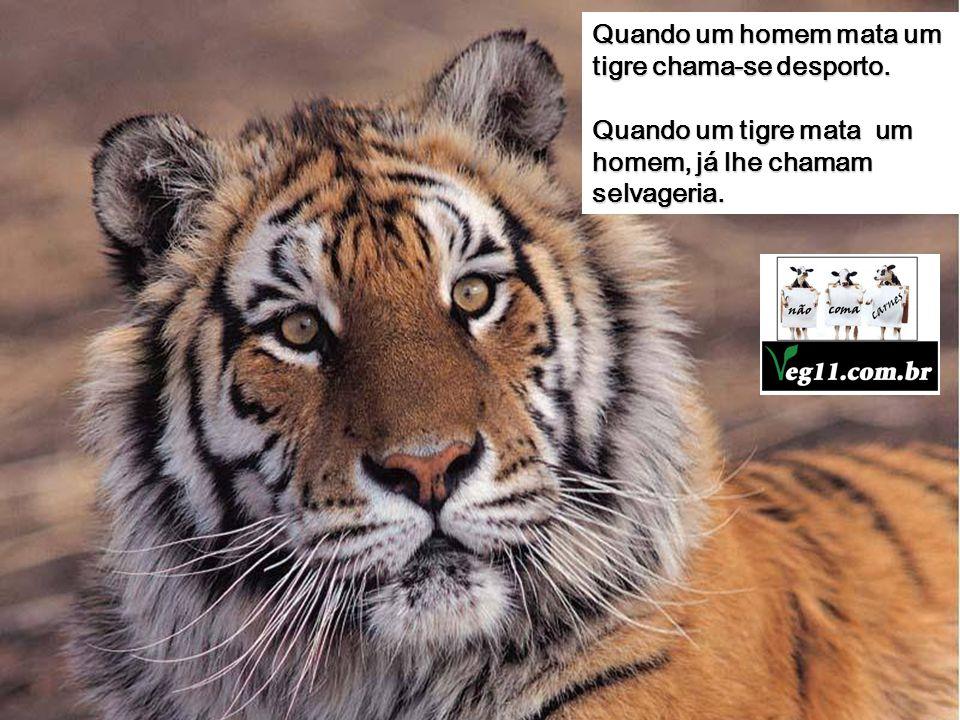 Quando um homem mata um tigre chama-se desporto.