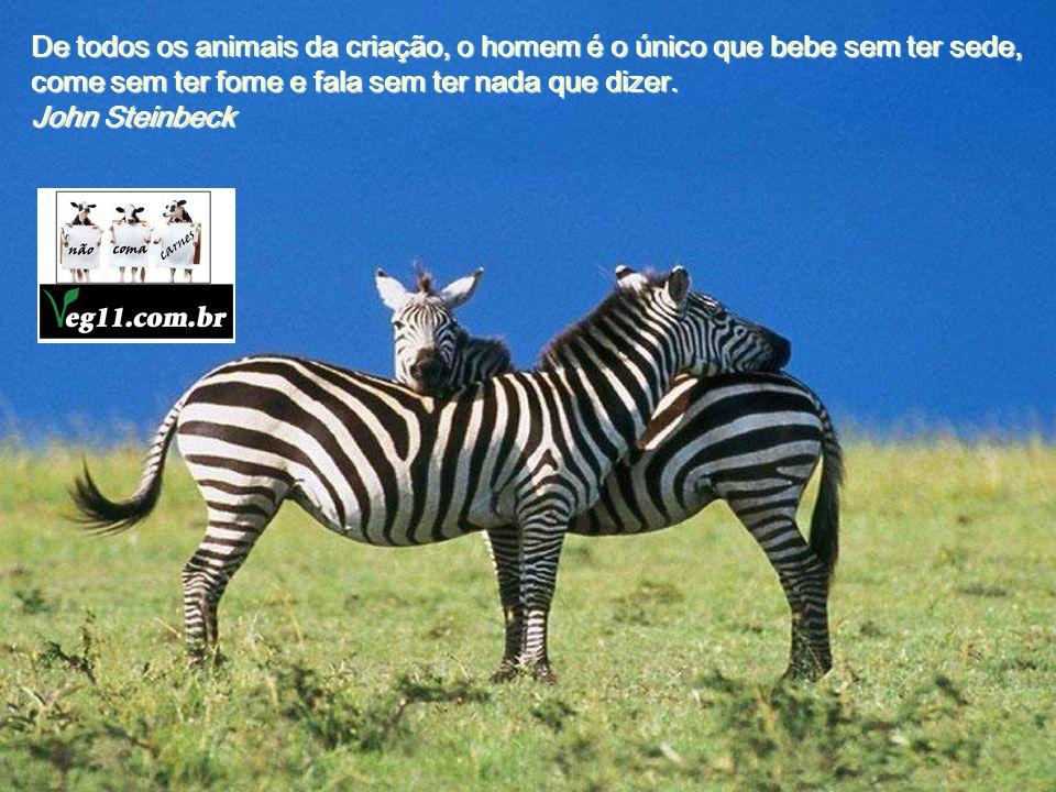 De todos os animais da criação, o homem é o único que bebe sem ter sede, come sem ter fome e fala sem ter nada que dizer.