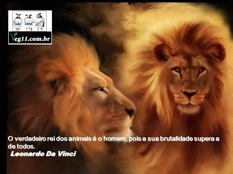 O verdadeiro rei dos animais é o homem, pois a sua brutalidade supera a de todos.