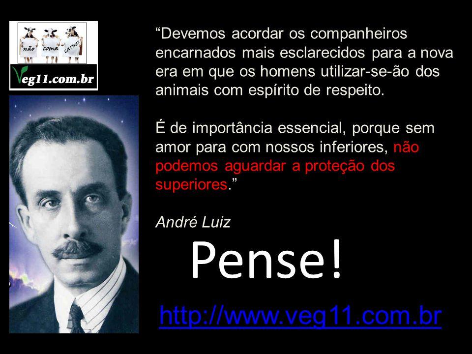 Pense! http://www.veg11.com.br
