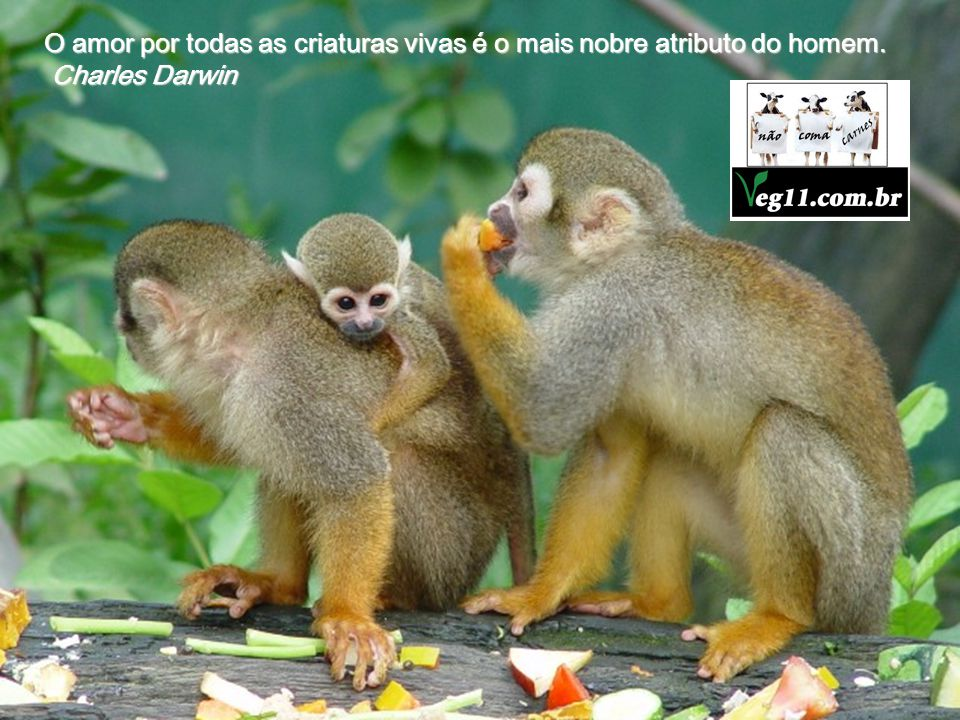 O amor por todas as criaturas vivas é o mais nobre atributo do homem.