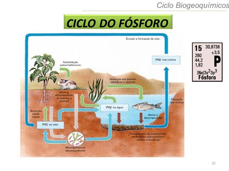 Ciclo Biogeoquímicos CICLO DO FÓSFORO