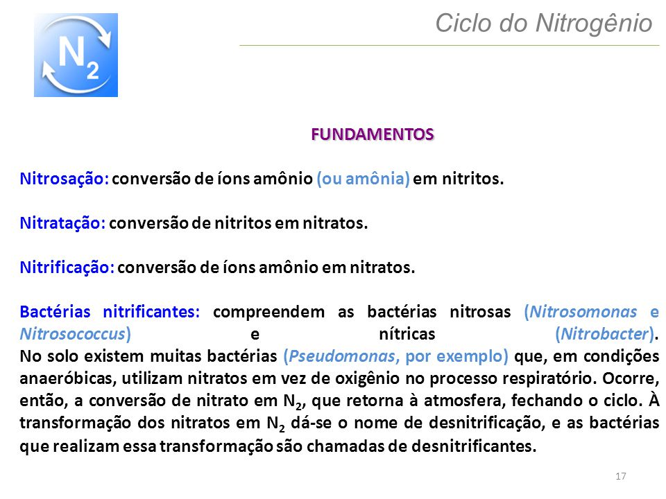 Ciclo do Nitrogênio FUNDAMENTOS