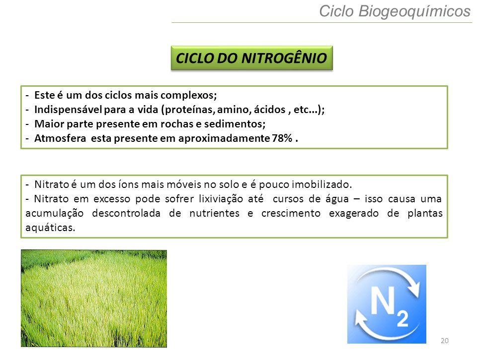Ciclo Biogeoquímicos CICLO DO NITROGÊNIO