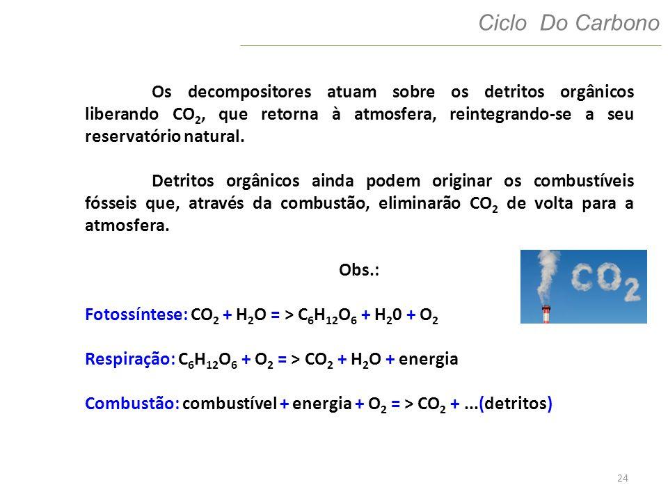 Os decompositores atuam sobre os detritos orgânicos liberando CO2, que retorna à atmosfera, reintegrando-se a seu reservatório natural.