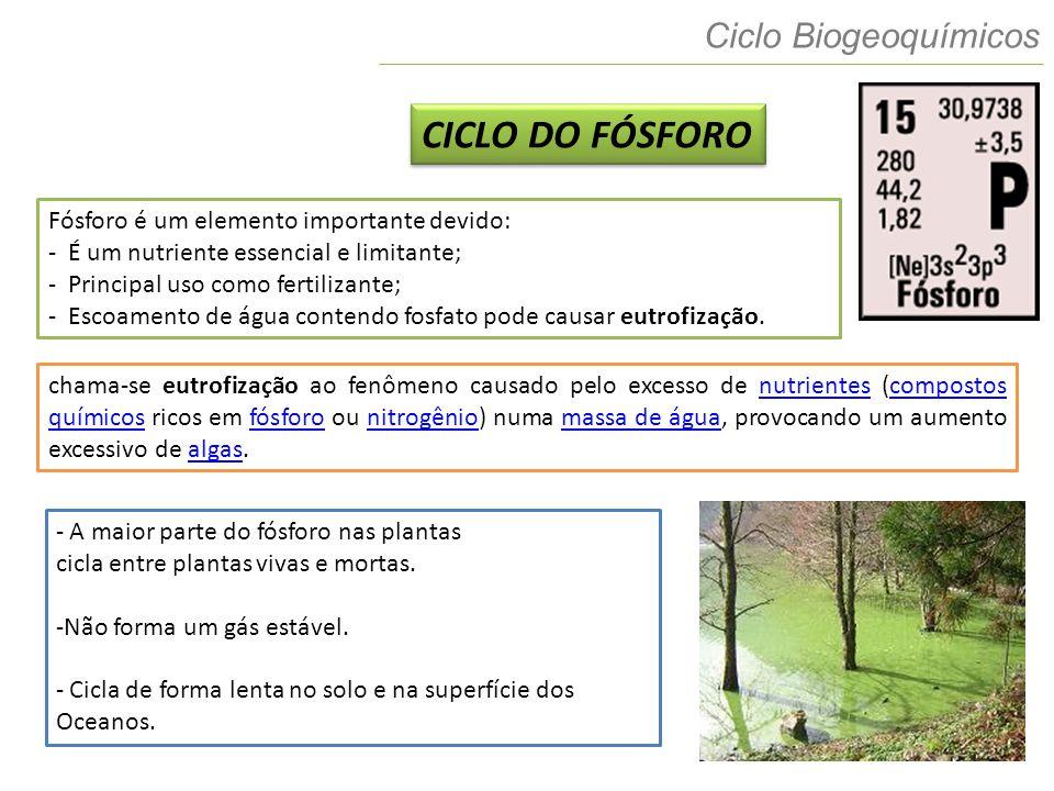 CICLO DO FÓSFORO Ciclo Biogeoquímicos