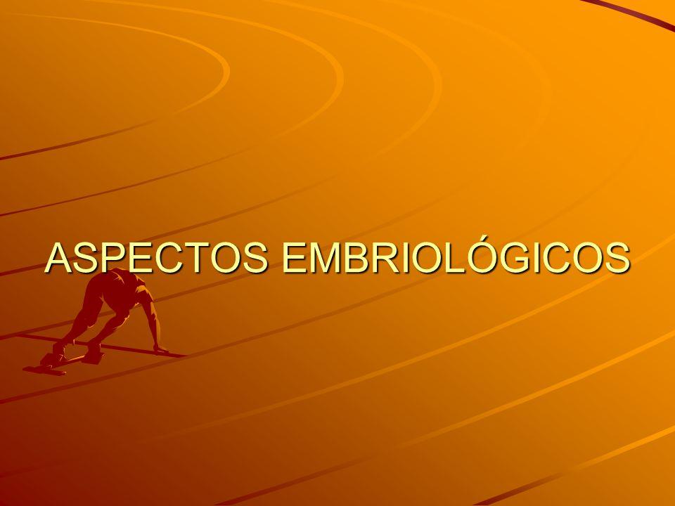 ASPECTOS EMBRIOLÓGICOS