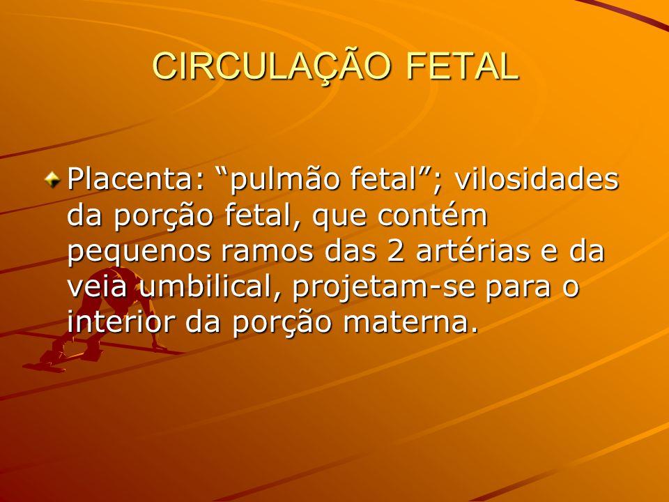 CIRCULAÇÃO FETAL