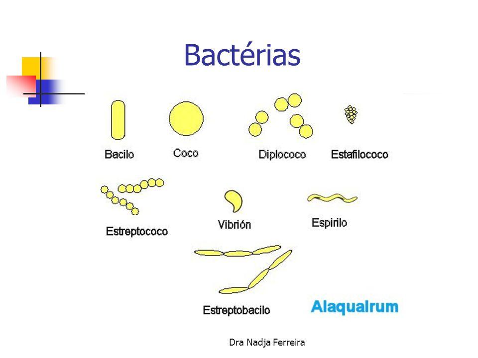 Bactérias Dra Nadja Ferreira