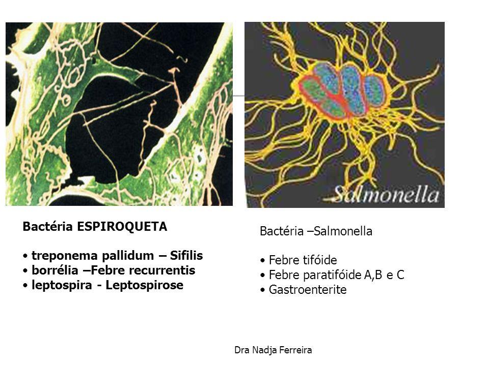 treponema pallidum – Sifilis borrélia –Febre recurrentis
