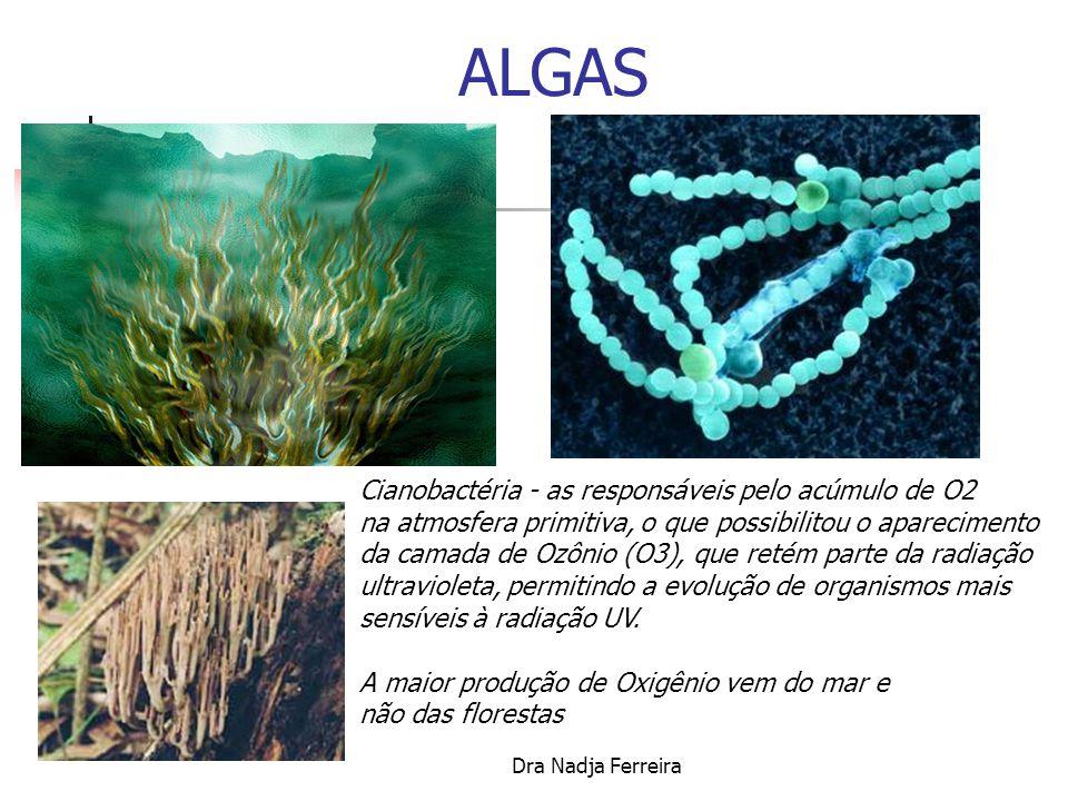 ALGAS Cianobactéria - as responsáveis pelo acúmulo de O2