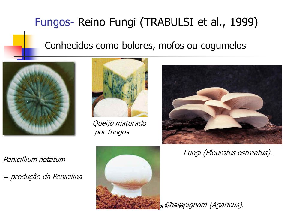 Fungos- Reino Fungi (TRABULSI et al., 1999)