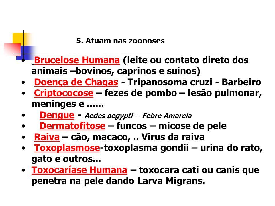 Doença de Chagas - Tripanosoma cruzi - Barbeiro