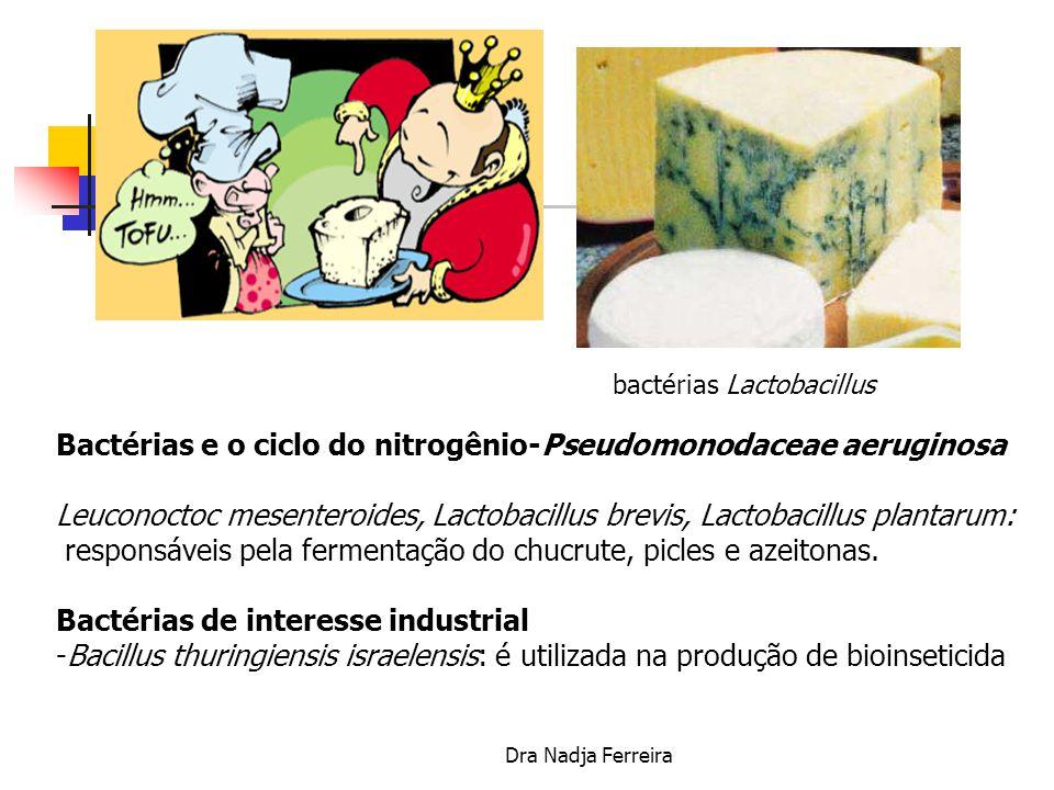 Bactérias e o ciclo do nitrogênio-Pseudomonodaceae aeruginosa