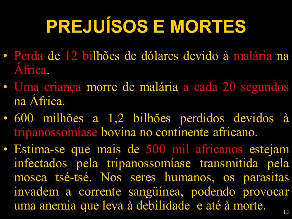 PREJUÍSOS E MORTES Perda de 12 bilhões de dólares devido à malária na África. Uma criança morre de malária a cada 20 segundos na África.