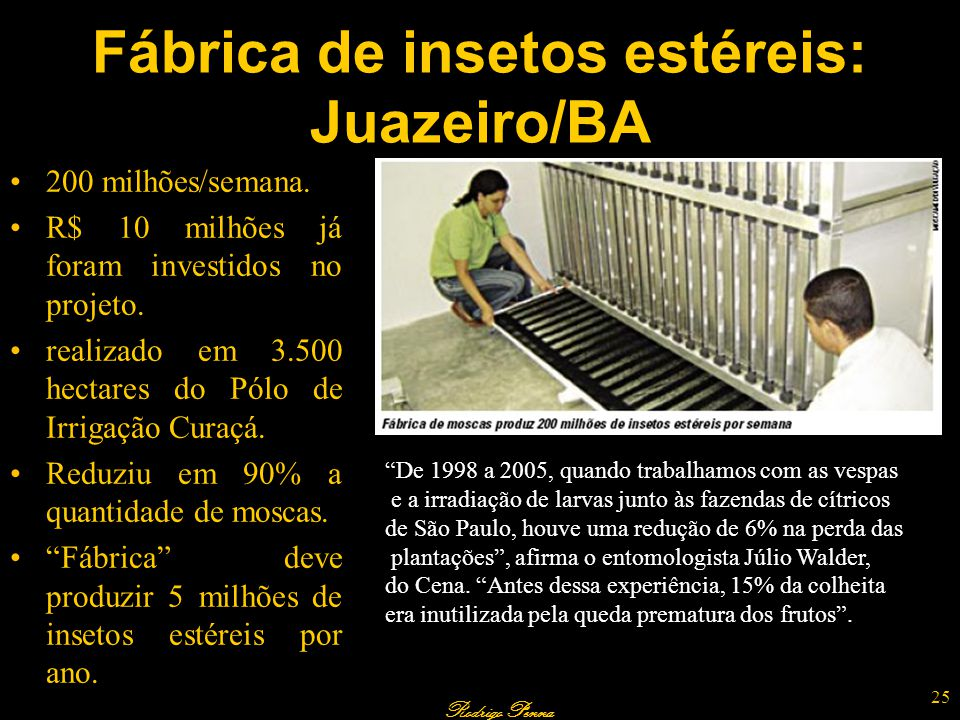 Fábrica de insetos estéreis: Juazeiro/BA