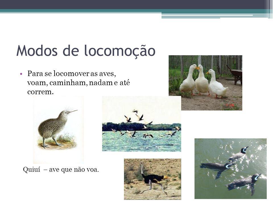 Modos de locomoção Para se locomover as aves, voam, caminham, nadam e até correm.