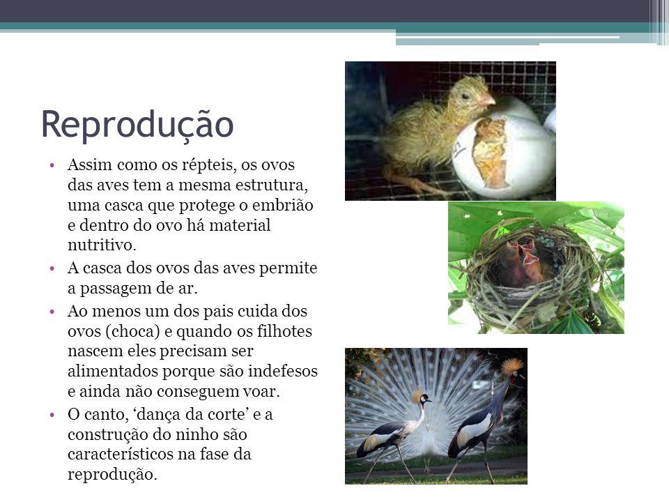 Reprodução Assim como os répteis, os ovos das aves tem a mesma estrutura, uma casca que protege o embrião e dentro do ovo há material nutritivo.
