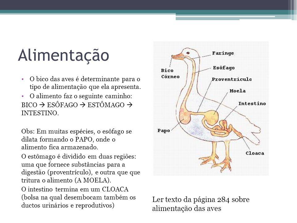 Alimentação Ler texto da página 284 sobre alimentação das aves