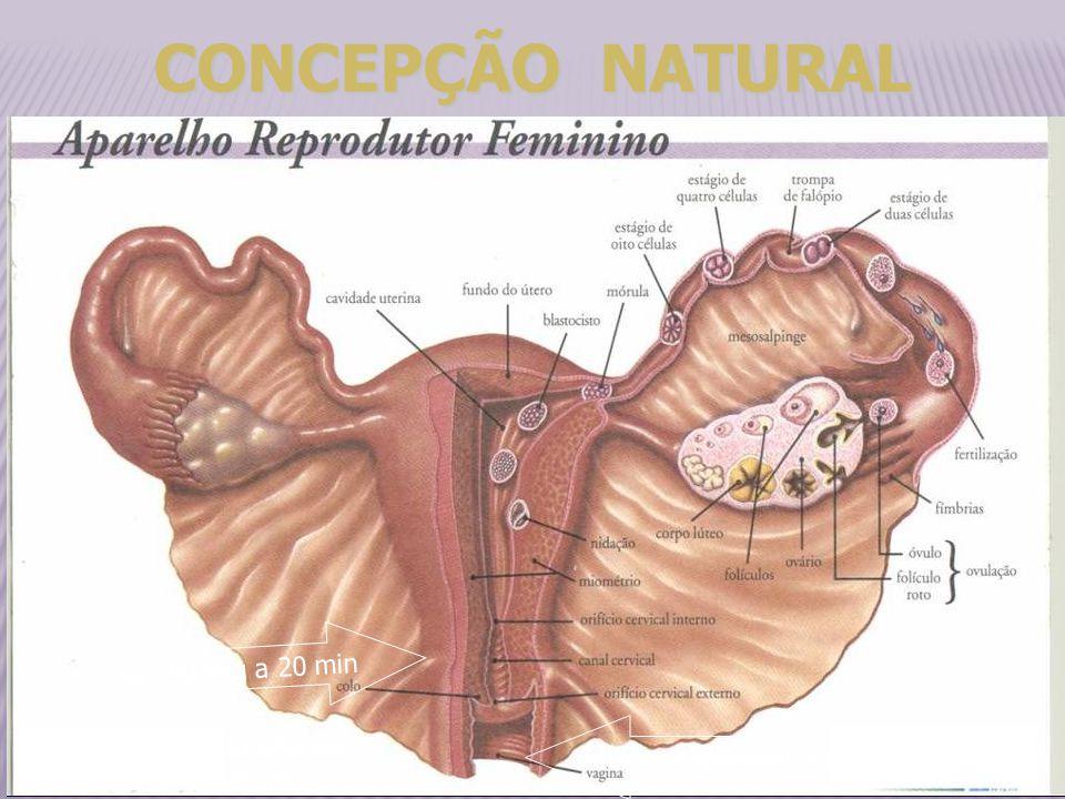 milhões espermatozoides