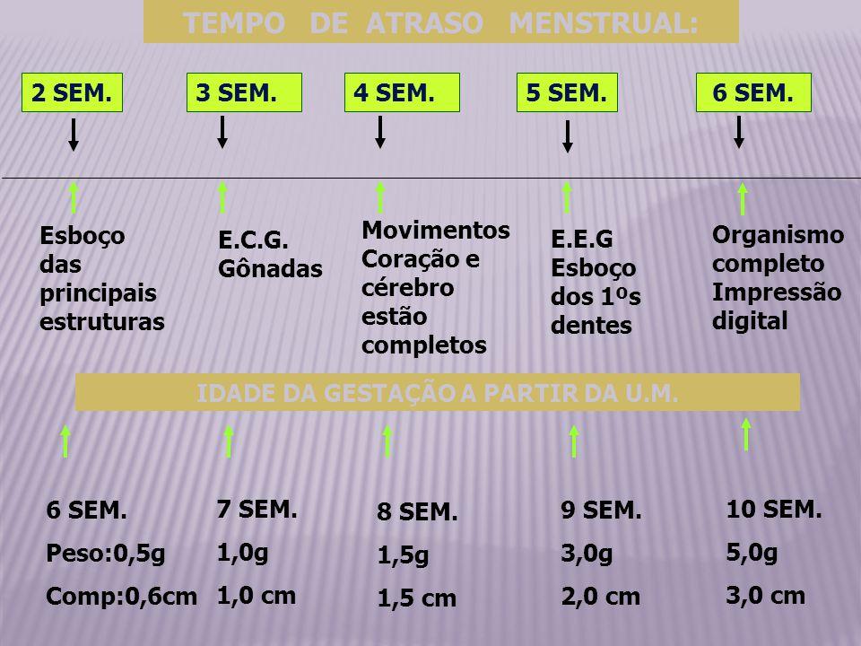 TEMPO DE ATRASO MENSTRUAL: IDADE DA GESTAÇÃO A PARTIR DA U.M.