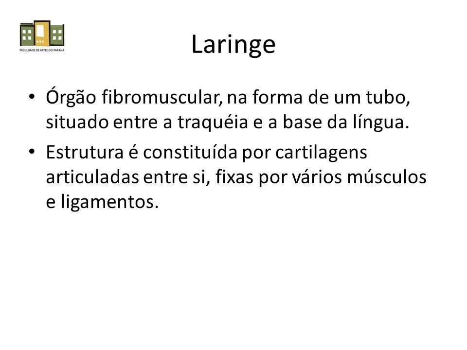 Laringe Órgão fibromuscular, na forma de um tubo, situado entre a traquéia e a base da língua.