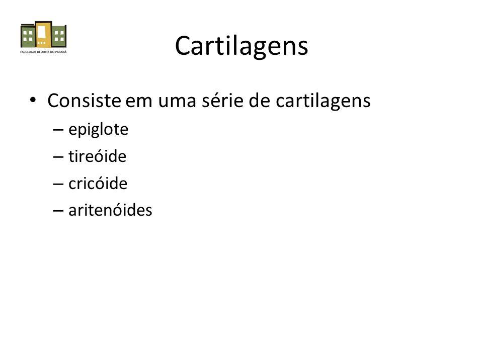 Cartilagens Consiste em uma série de cartilagens epiglote tireóide