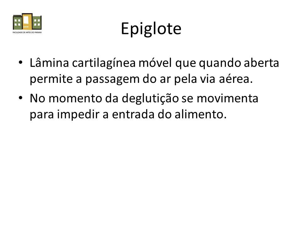 Epiglote Lâmina cartilagínea móvel que quando aberta permite a passagem do ar pela via aérea.