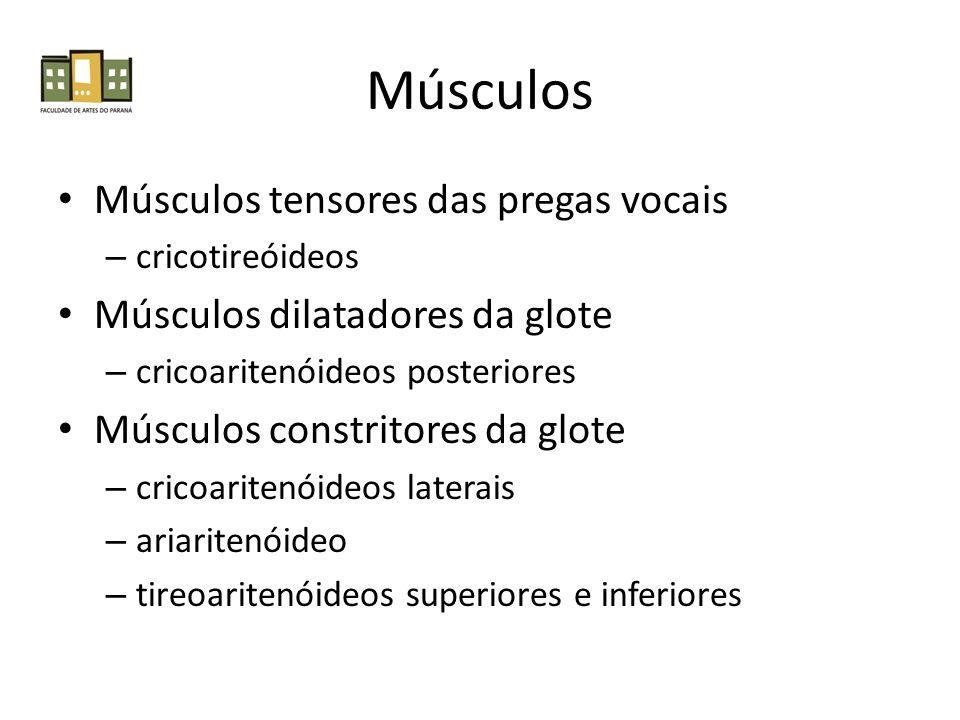 Músculos Músculos tensores das pregas vocais