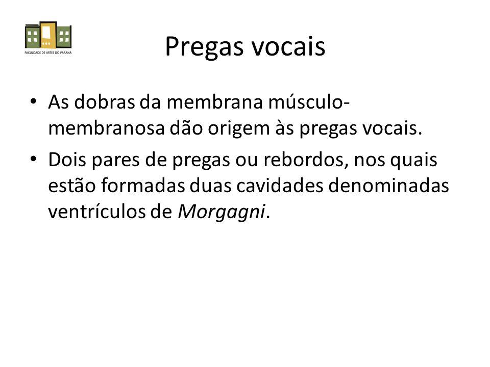 Pregas vocais As dobras da membrana músculo-membranosa dão origem às pregas vocais.