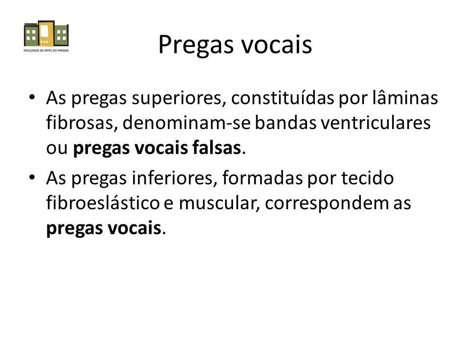 Pregas vocais As pregas superiores, constituídas por lâminas fibrosas, denominam-se bandas ventriculares ou pregas vocais falsas.
