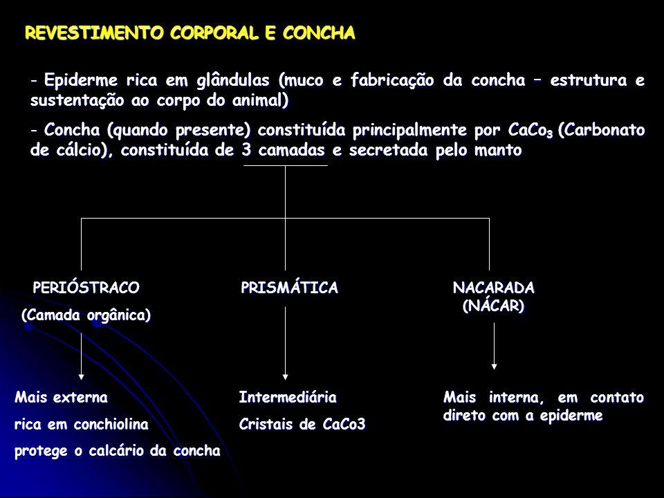 REVESTIMENTO CORPORAL E CONCHA