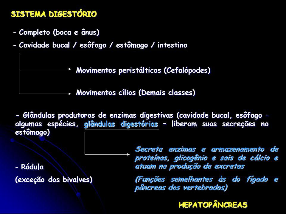 SISTEMA DIGESTÓRIO Completo (boca e ânus) Cavidade bucal / esôfago / estômago / intestino. Movimentos peristálticos (Cefalópodes)