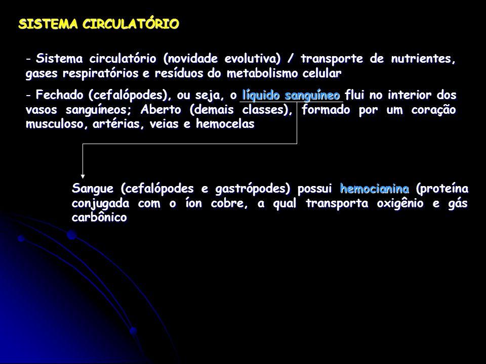 SISTEMA CIRCULATÓRIO Sistema circulatório (novidade evolutiva) / transporte de nutrientes, gases respiratórios e resíduos do metabolismo celular.