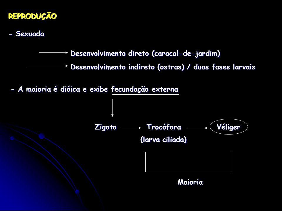 REPRODUÇÃO - Sexuada. Desenvolvimento direto (caracol-de-jardim) Desenvolvimento indireto (ostras) / duas fases larvais.