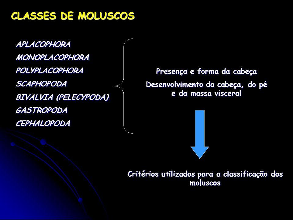 CLASSES DE MOLUSCOS APLACOPHORA MONOPLACOPHORA POLYPLACOPHORA