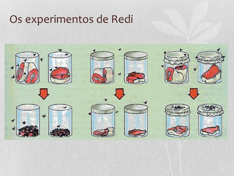 Os experimentos de Redi