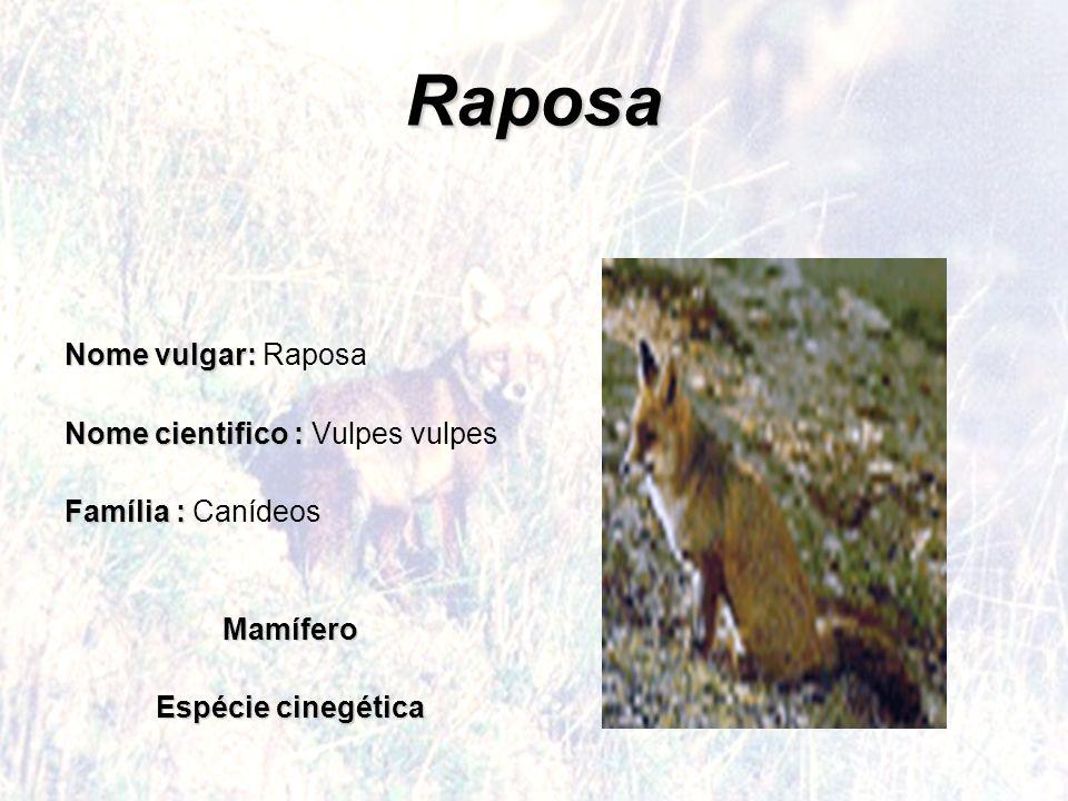 Raposa Nome vulgar: Raposa Nome cientifico : Vulpes vulpes