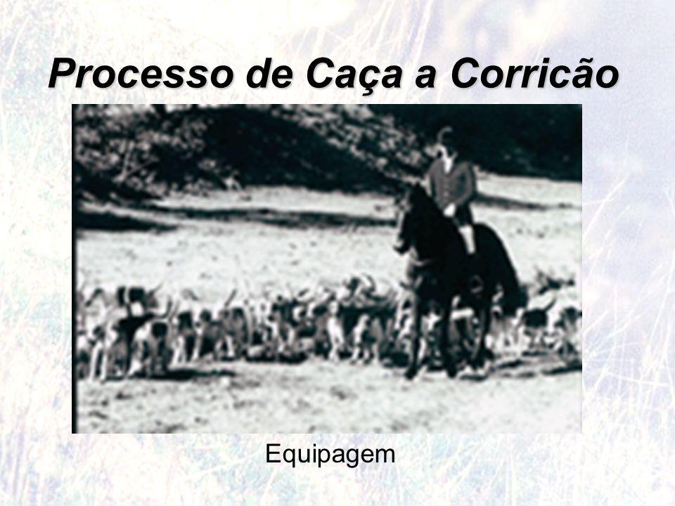 Processo de Caça a Corricão