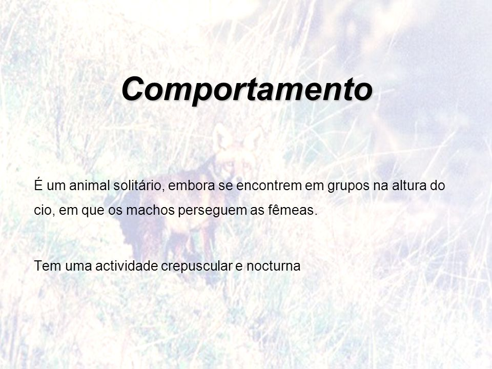 Comportamento É um animal solitário, embora se encontrem em grupos na altura do cio, em que os machos perseguem as fêmeas.